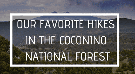 Our Favorite Hikes in the Coconino National Forest, Alma de Sedona Inn